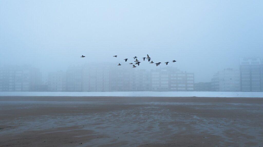 Ptaki lecące nad blokami